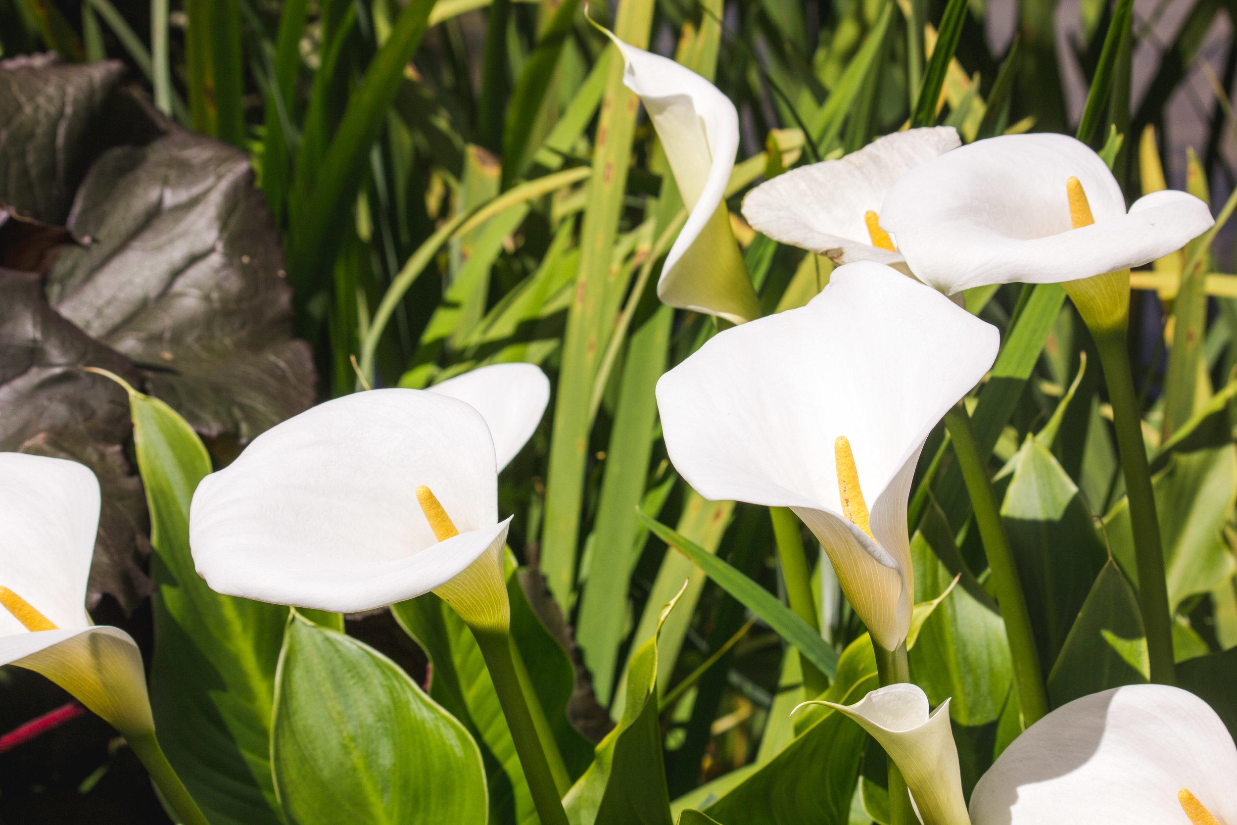 chch-botanic-12.jpg