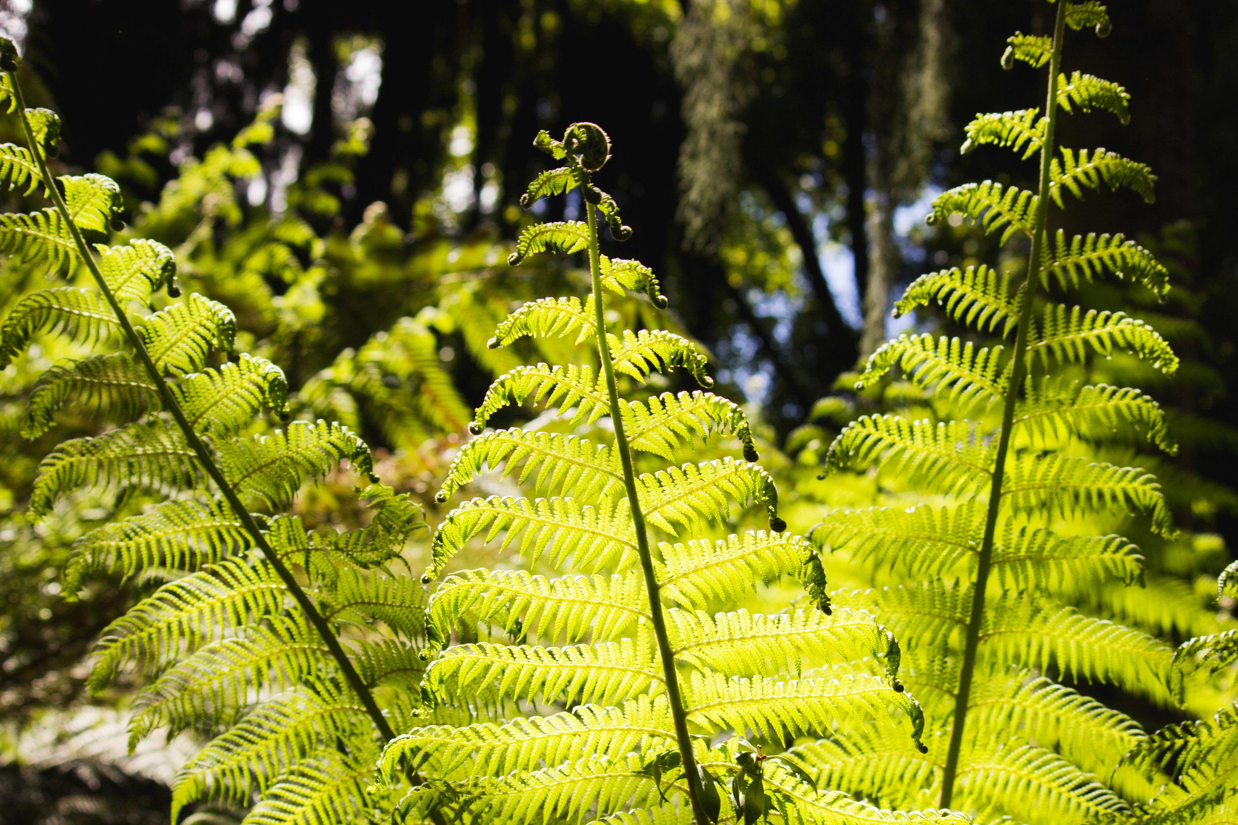 chch-botanic-13.jpg