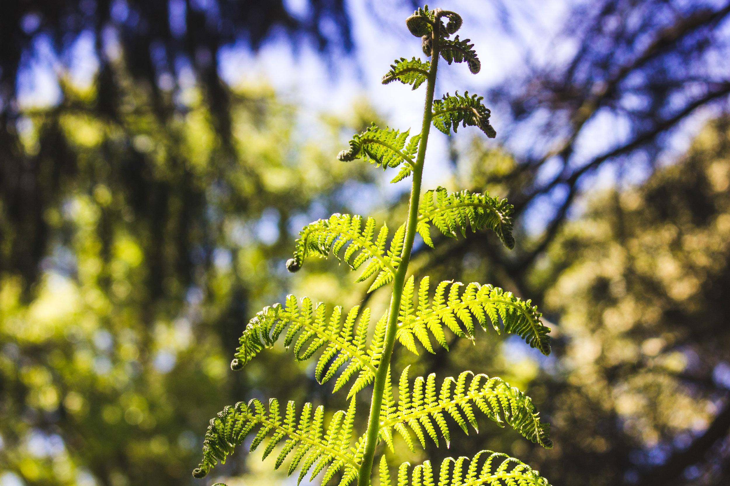 chch-botanic-14.jpg