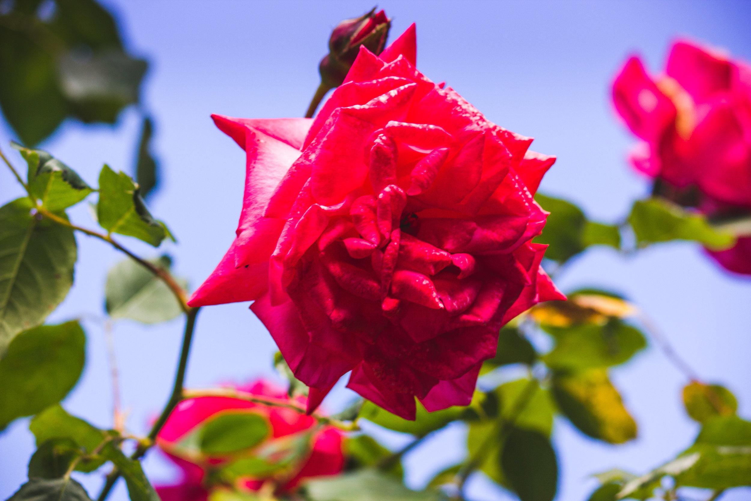 chch-botanic-15.jpg
