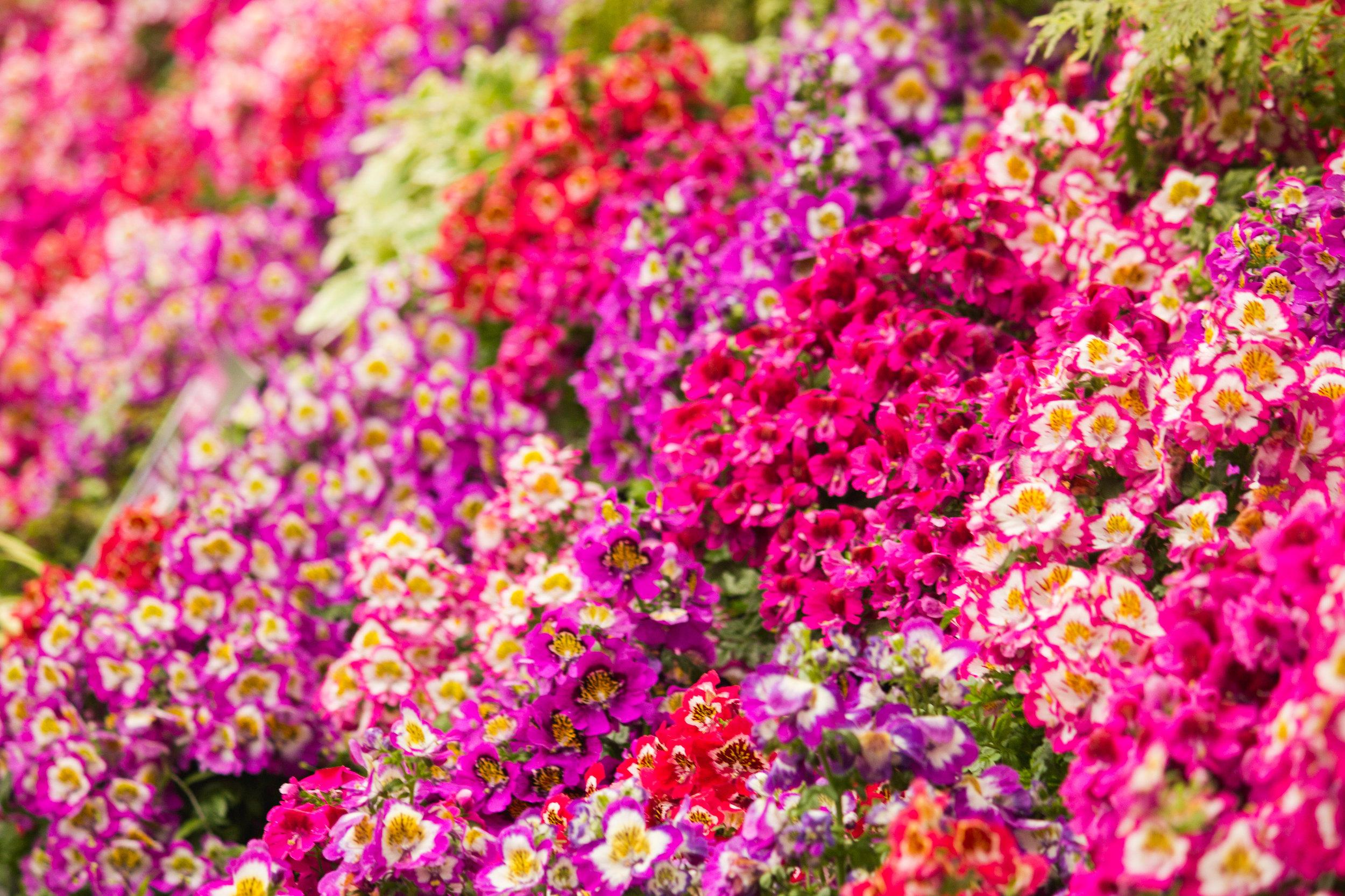 chch-botanic-18.jpg
