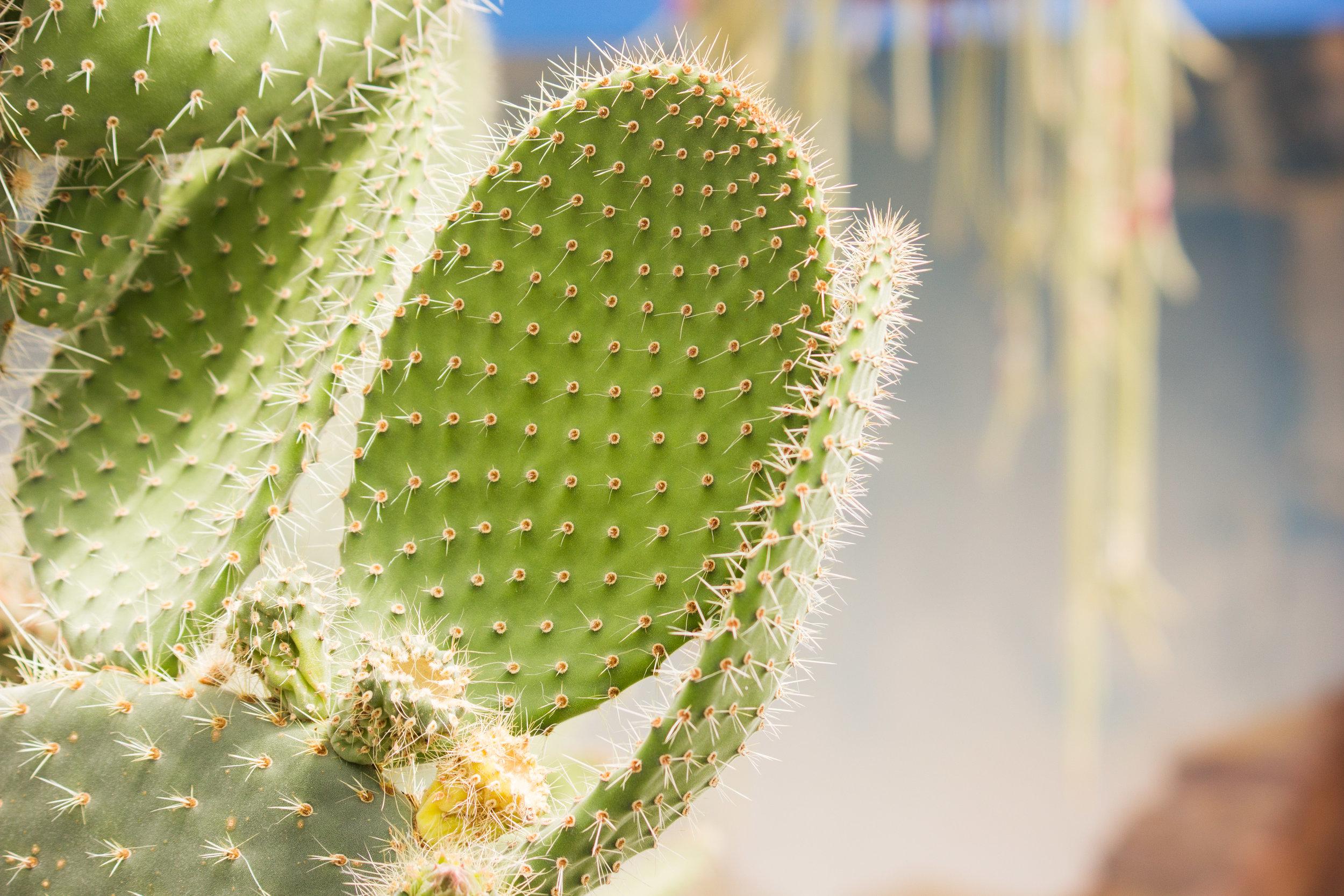 chch-botanic-21.jpg