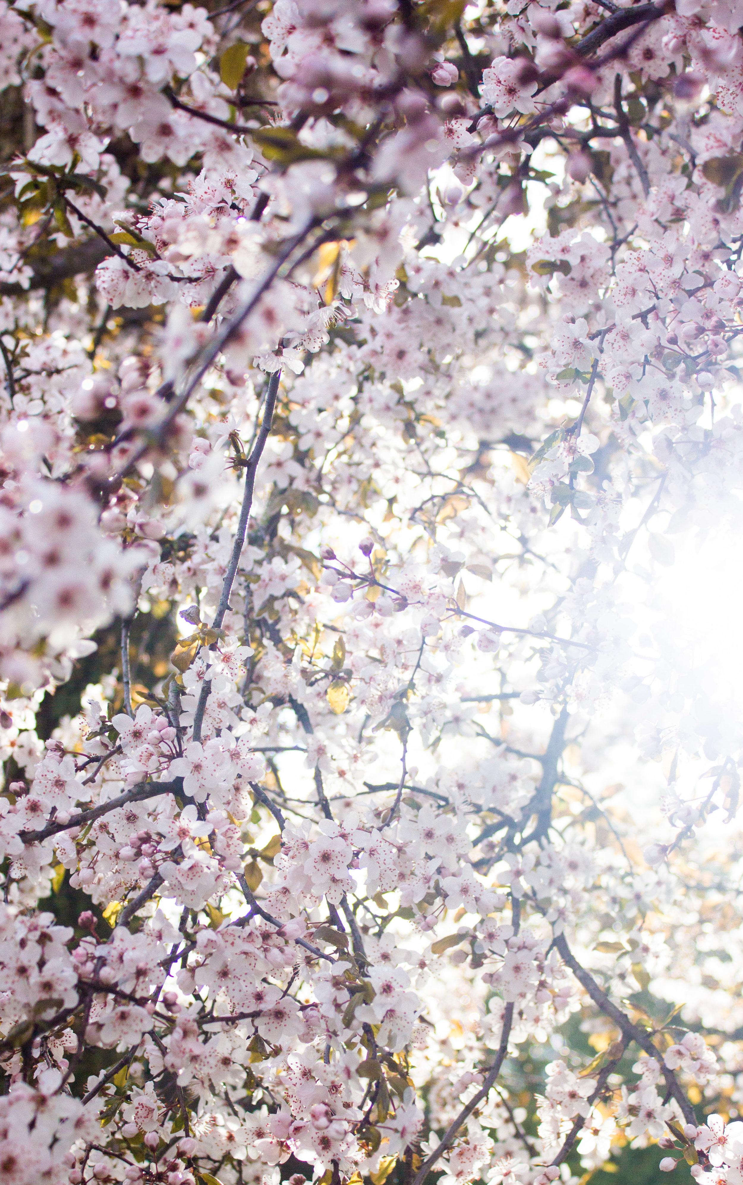7. Spring.jpg