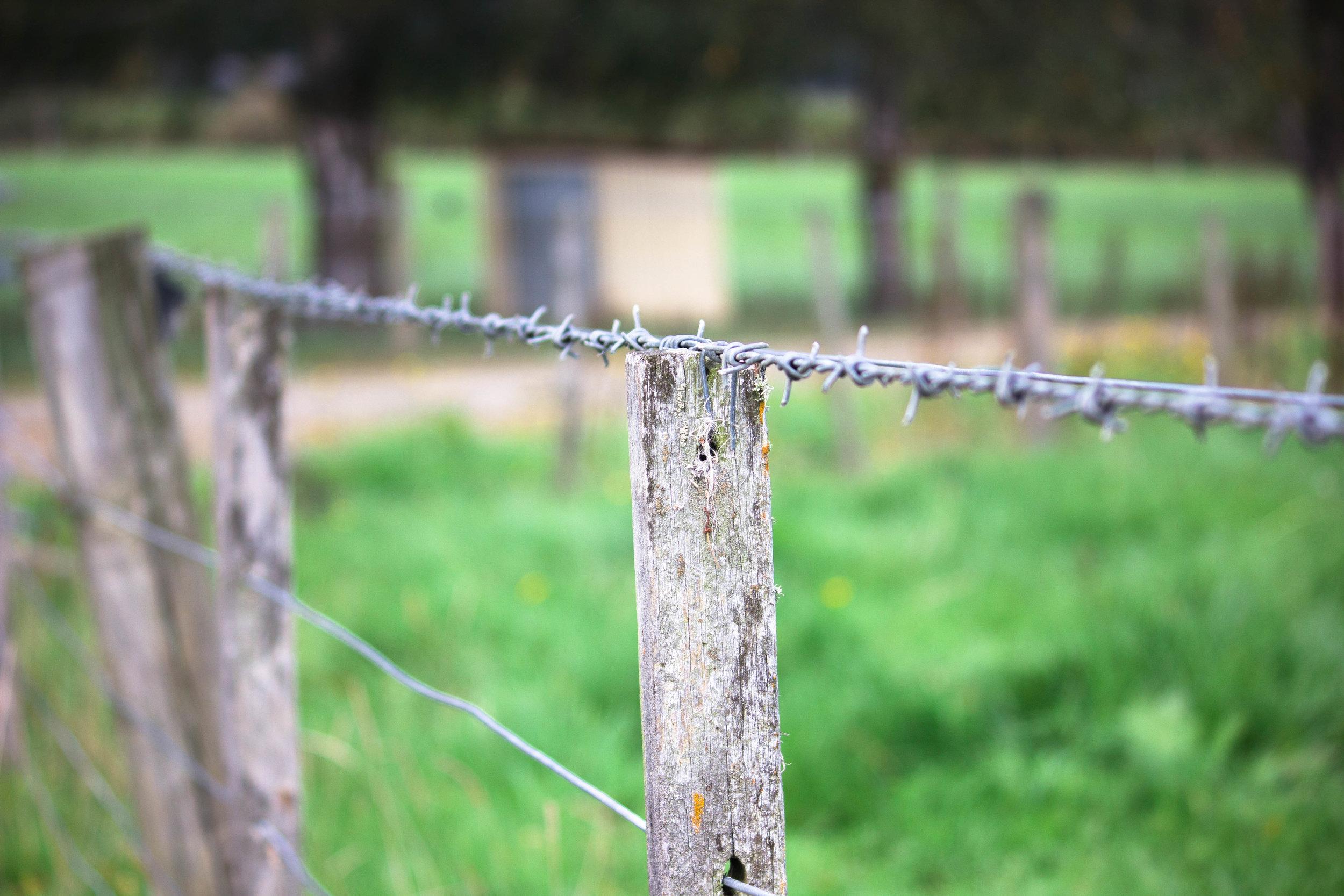 11. Fence.jpg