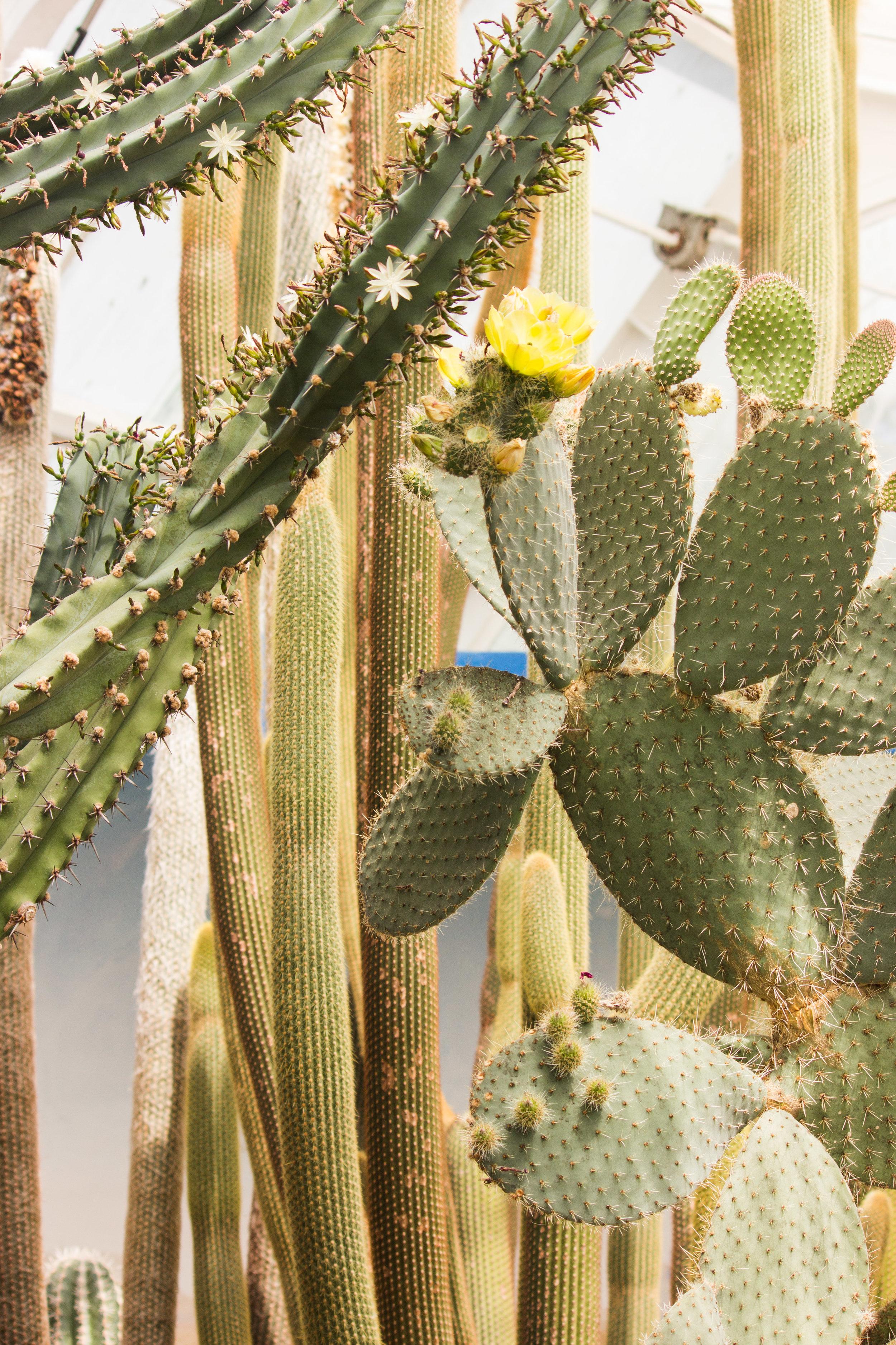 15. Cactus.jpg