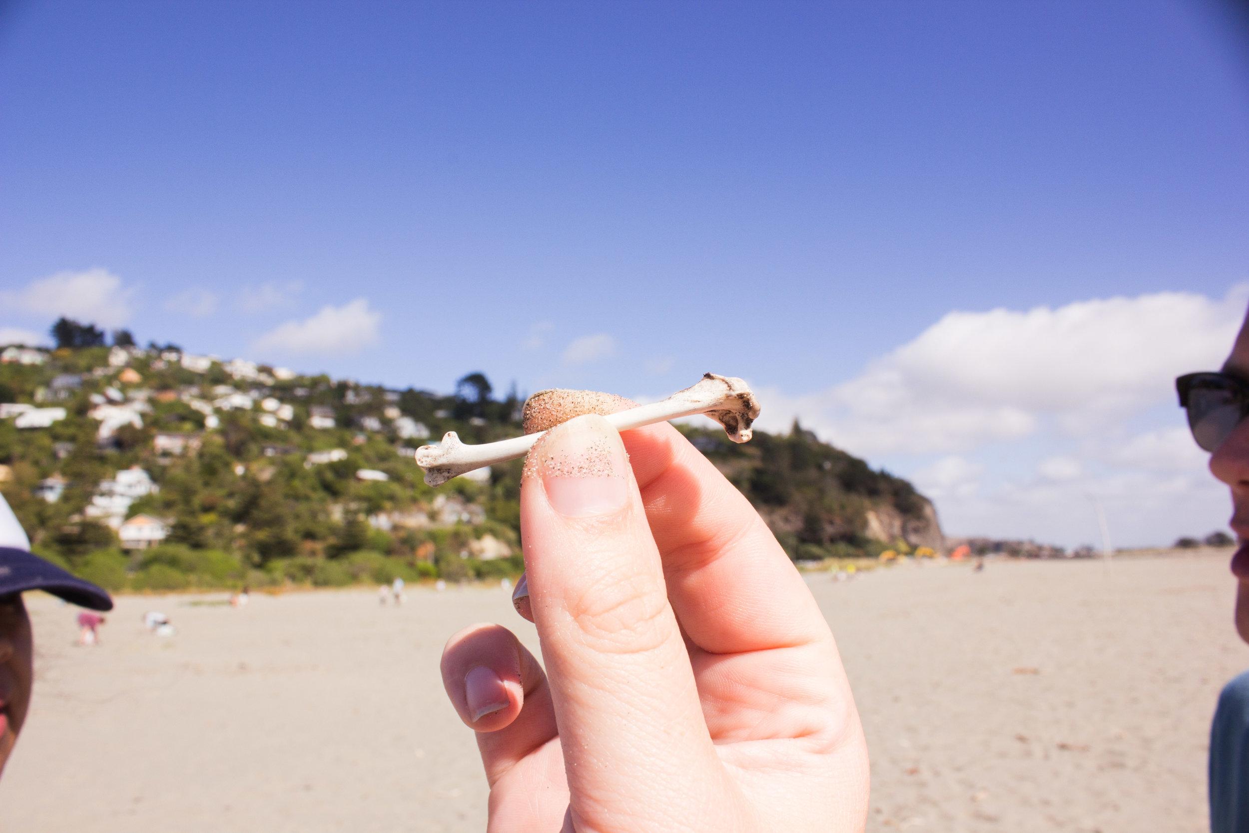 beach-clean-16.jpg