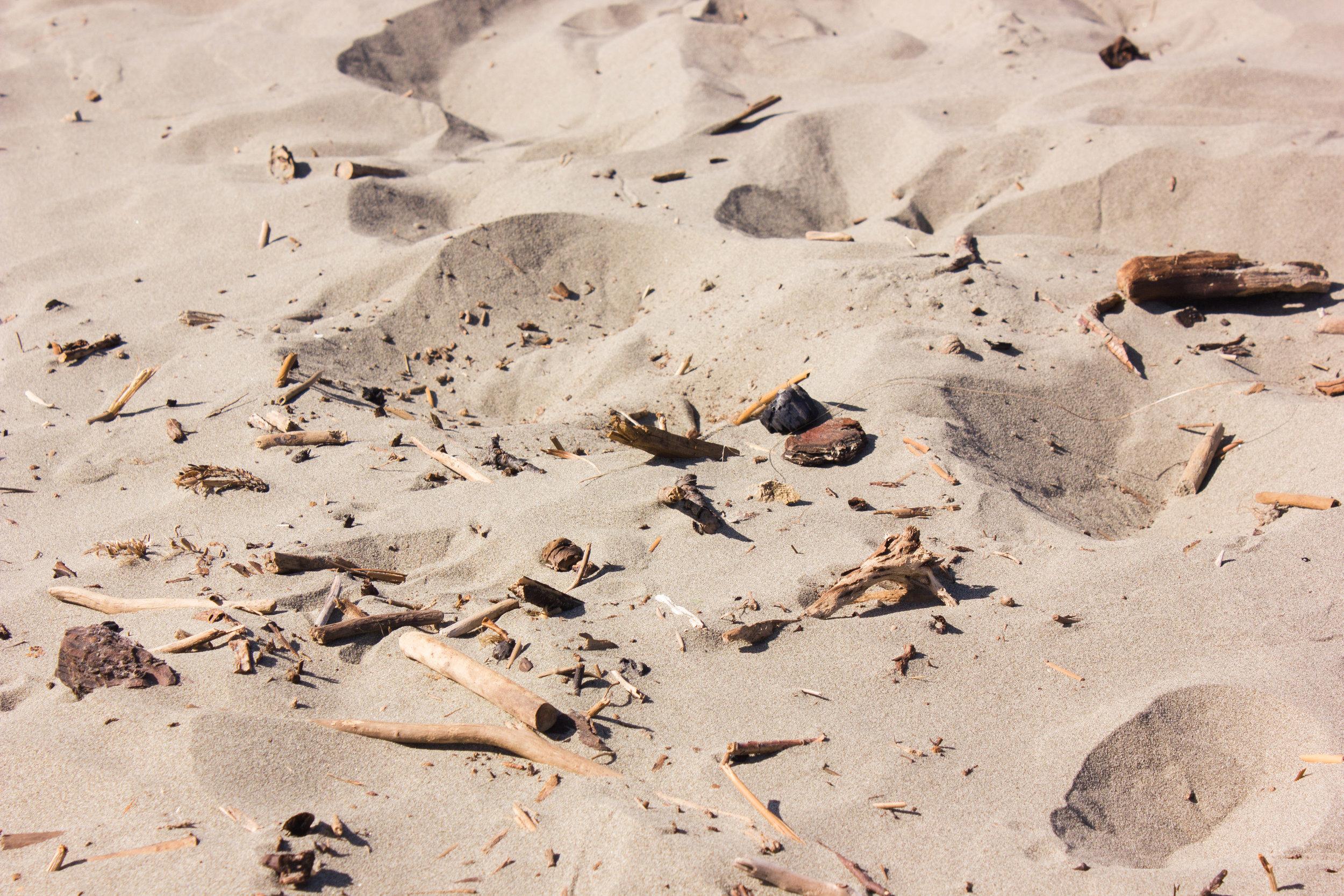 beach-clean-9.jpg