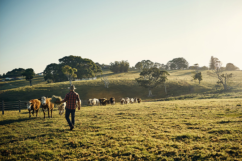 From beef to blueberries, milk to macadamia nuts, there's plenty that flourishes in Byron's hinterland