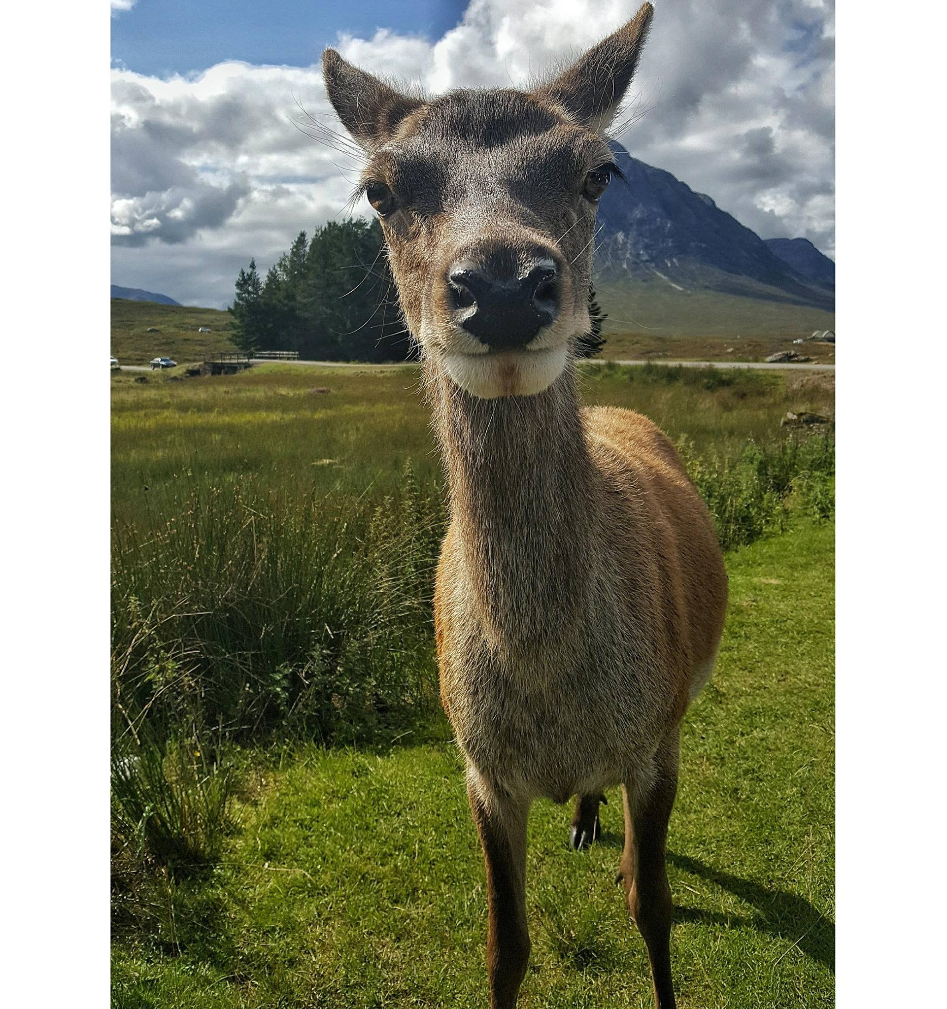Making deer friends in Glen Coe last summer. Image by Bianca Sala.