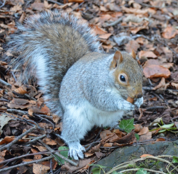 One of the Botanic Gardens furry inhabitants happily nibbling some of the almonds I had brought