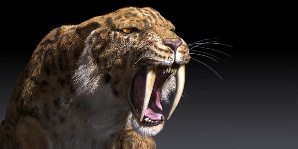 http://dinoanimals.com/animals/the-saber-toothed-tiger-smilodon/