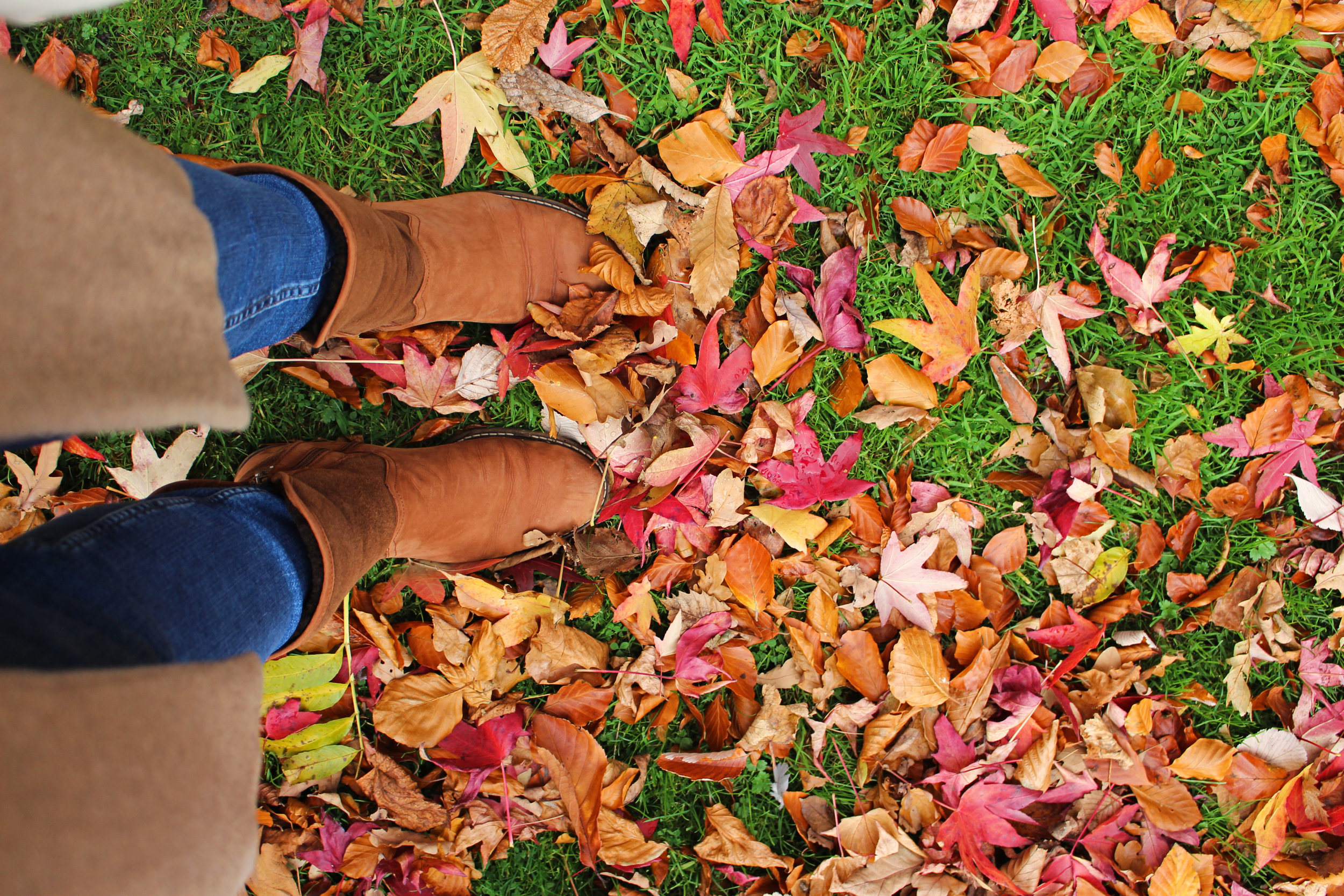Autumnal fun: stepping into the crunchy leaves covering the lawns adjacent to the main gate.