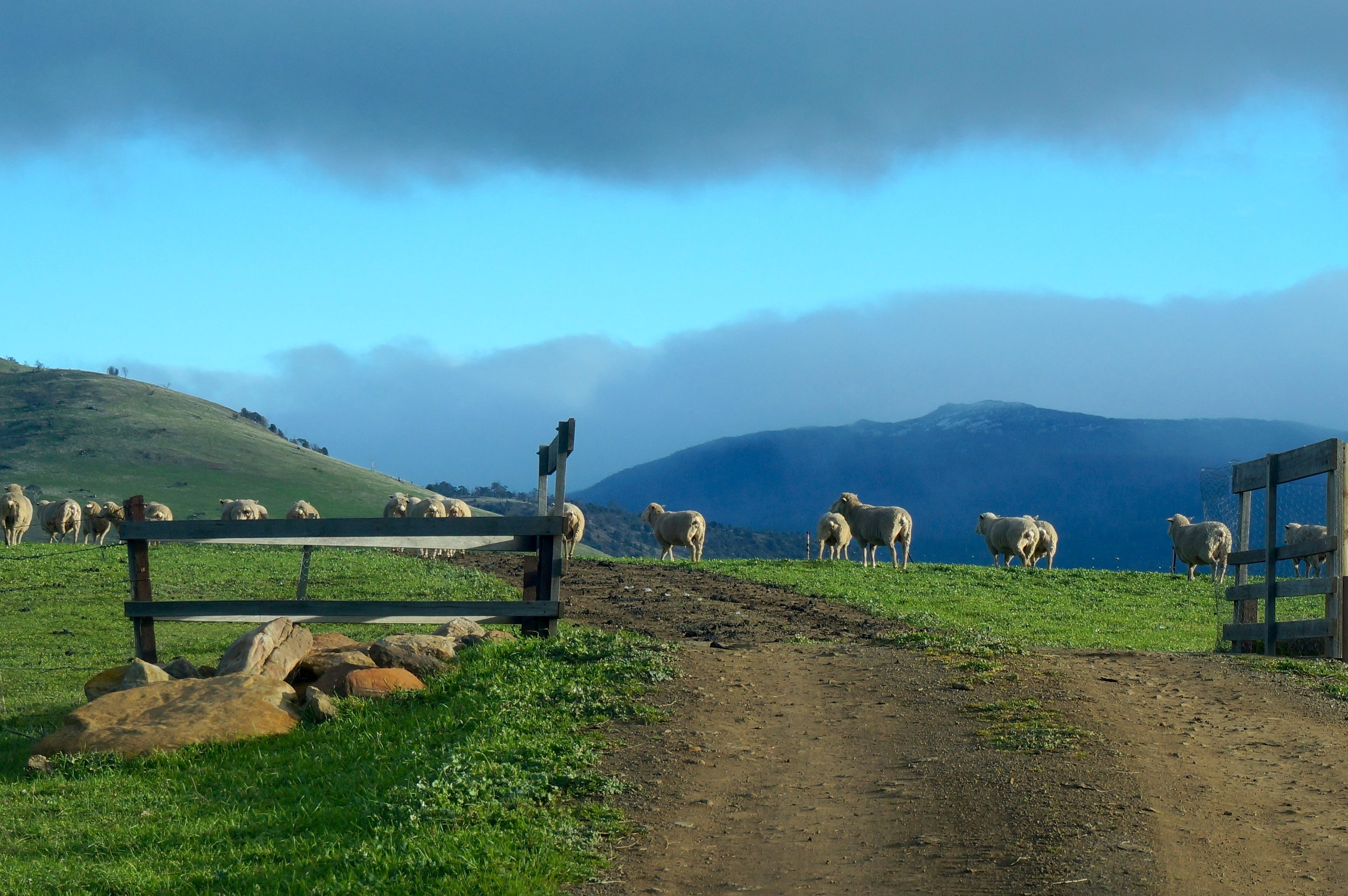 Carringa-Farm-3-Heidi-Sze-Apples-Under-My-Bed.jpg