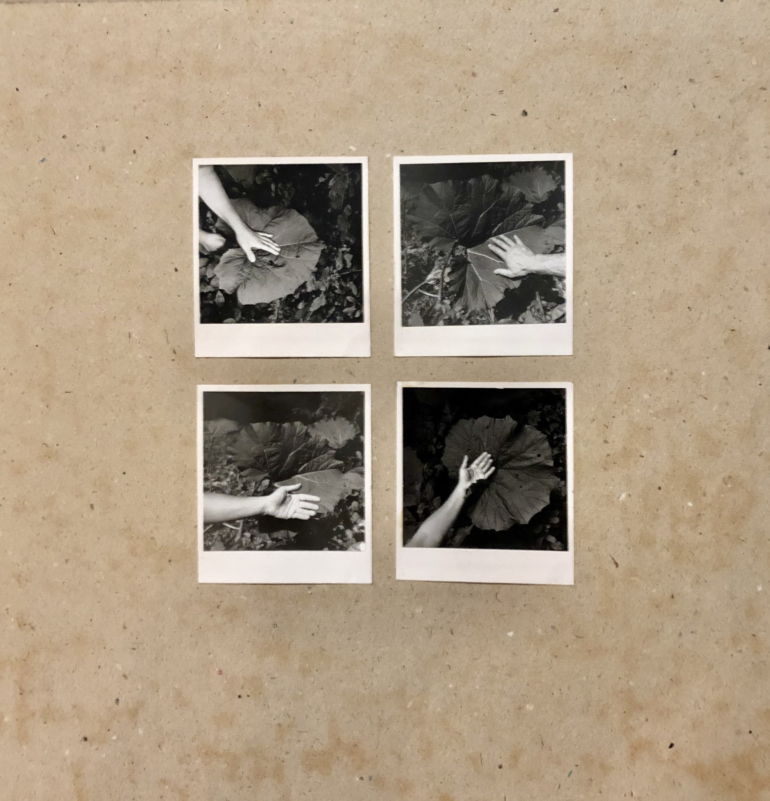 Kern Michal, 1979, Lopúchy, 4 fotografie na kartóne, 4x10x9 cm
