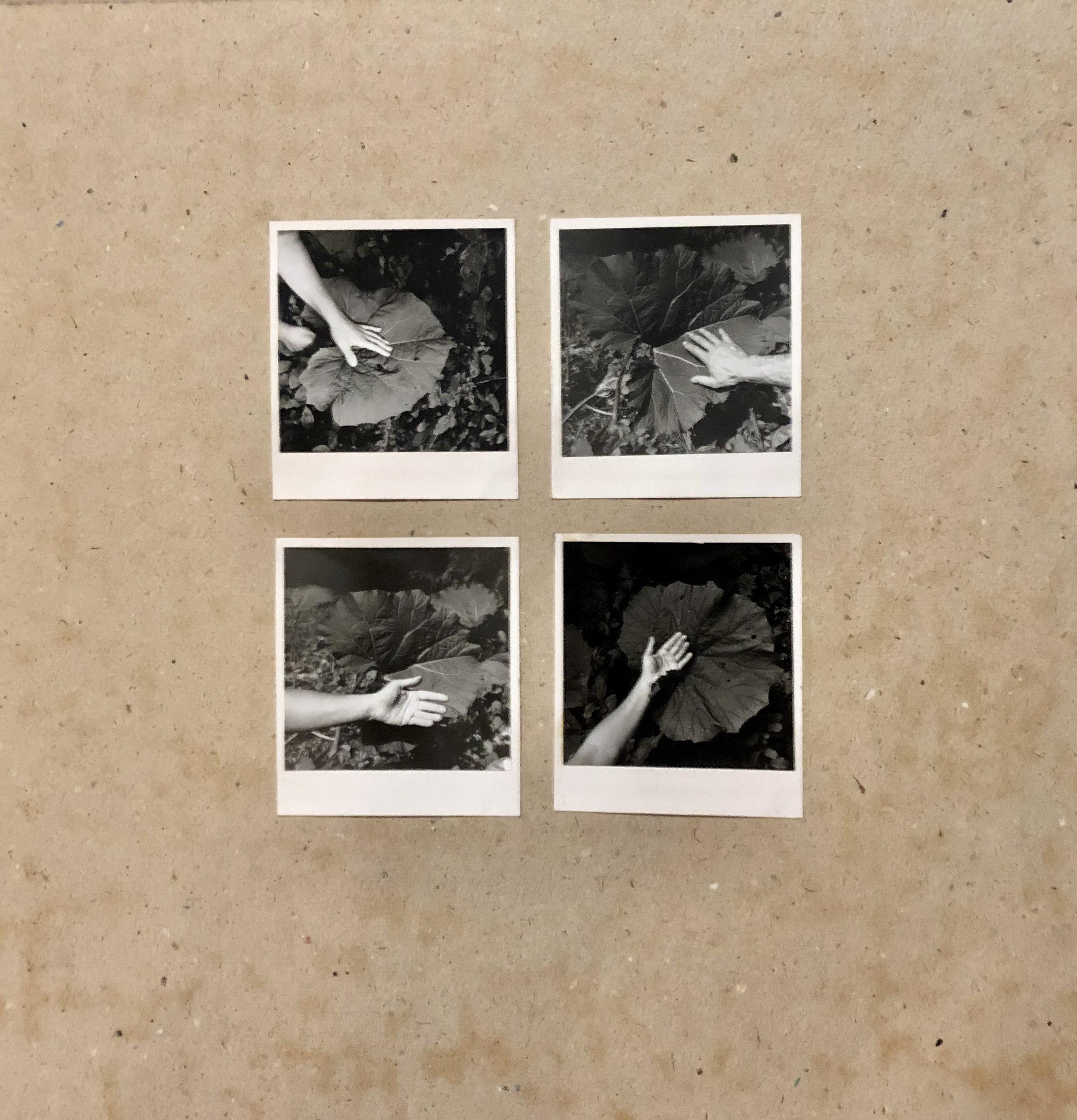 1979, Lopúchy, 4 fotografie na kartóne, 4 x 10 x 9 cm