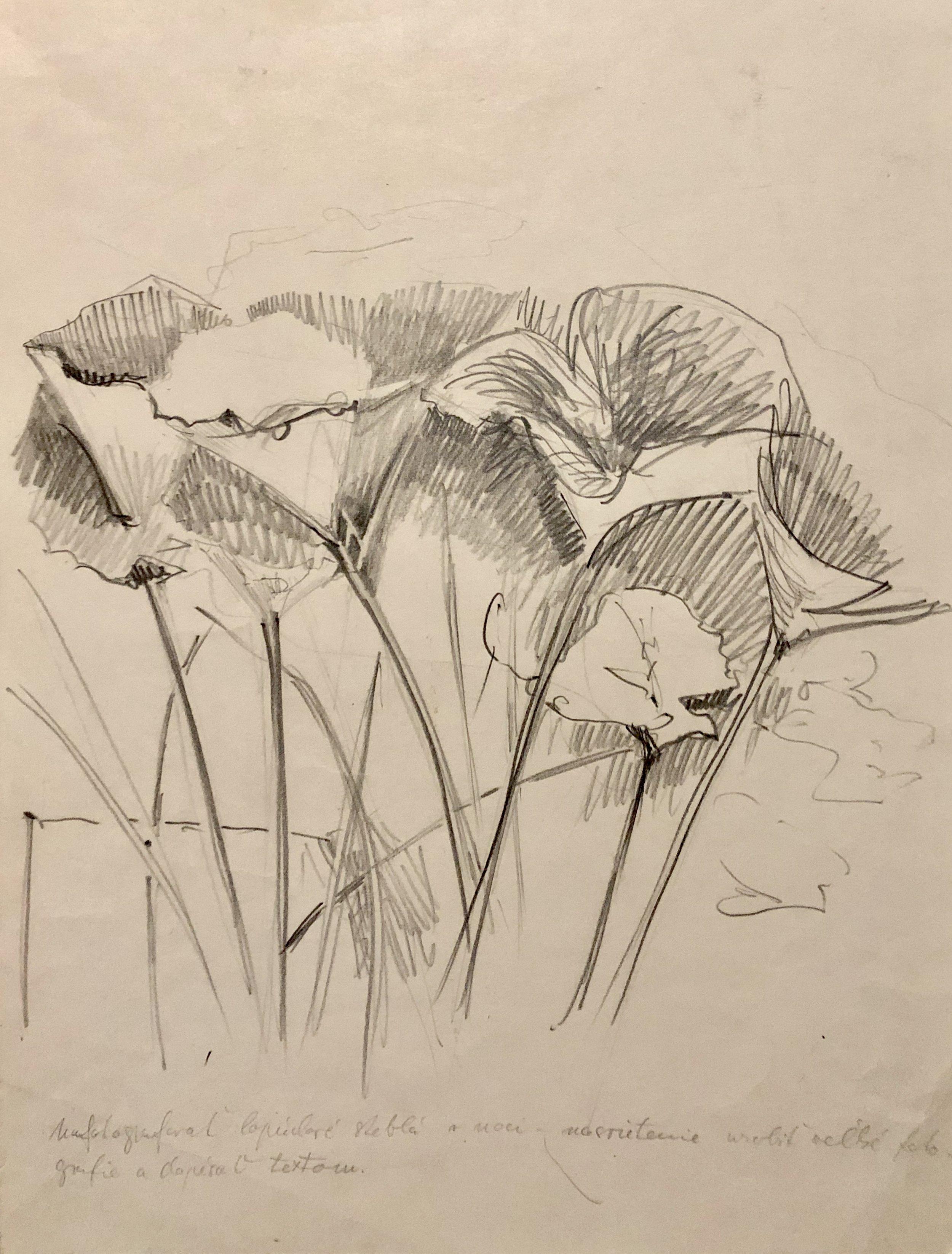 1978, Lopúchy, kresba na papieri , 42x32 cm