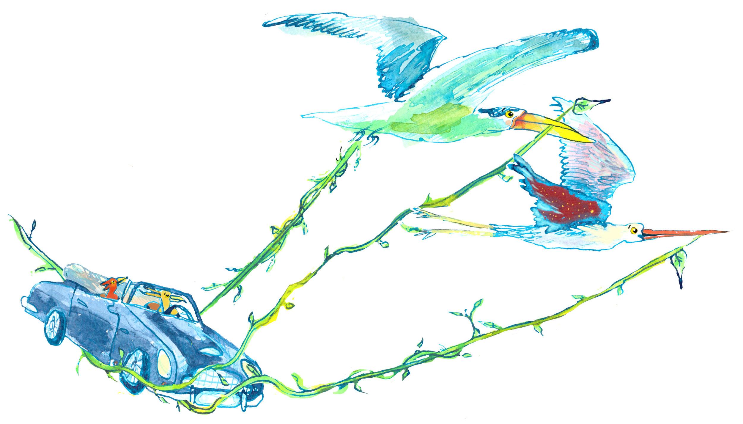 aston-marten-birds.jpg