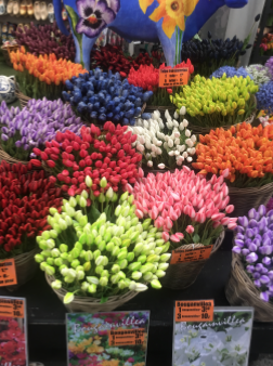 The floating flower market in Amsterdam and tulips in every possible colour.