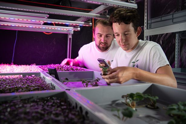 SUSTAINABLE FARMING LETTUS GROW USE AEROPONICS AND LED LIGHTING FOR THEIR INDOOR FARMING SOLUTION