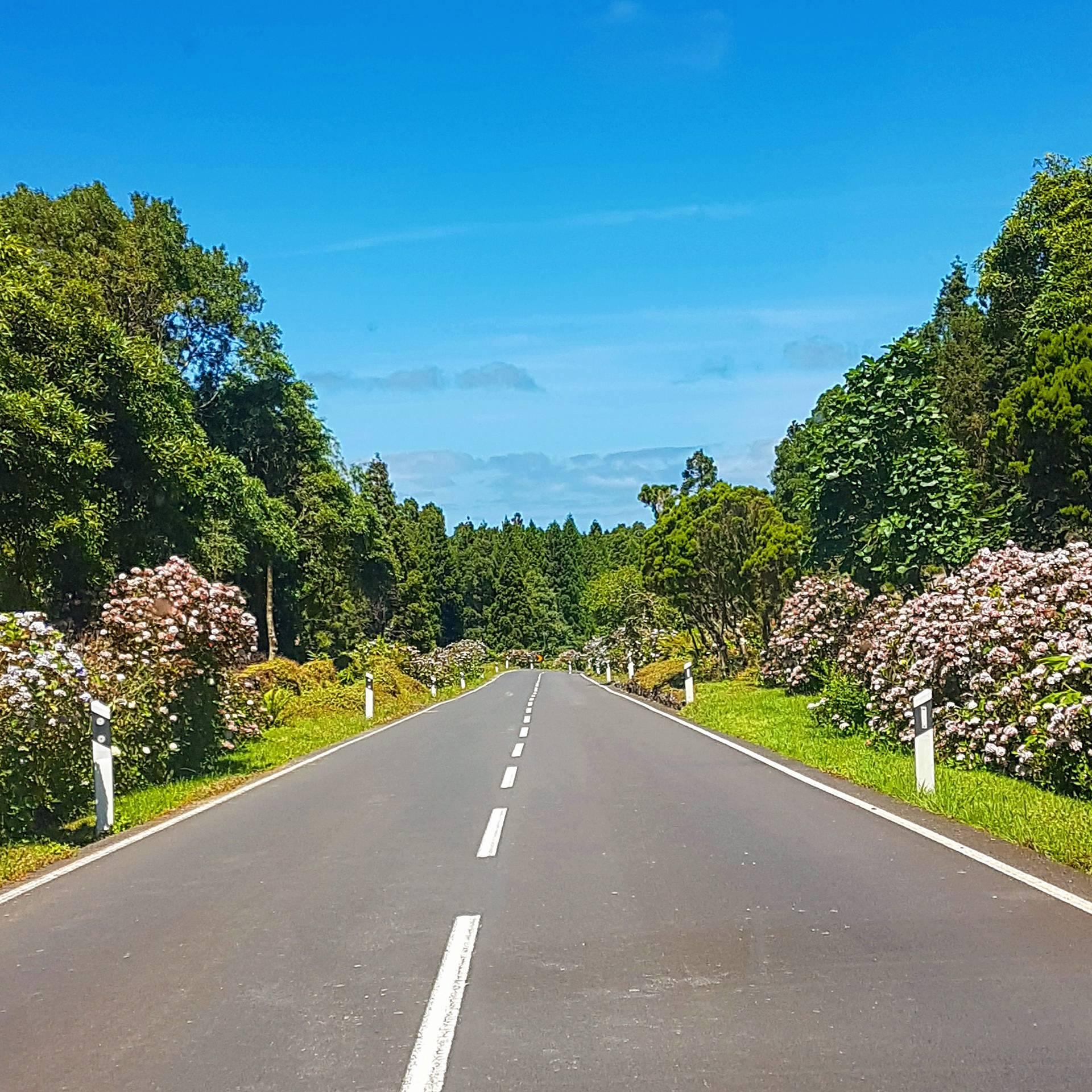 Road with Hydrangeas Flowers
