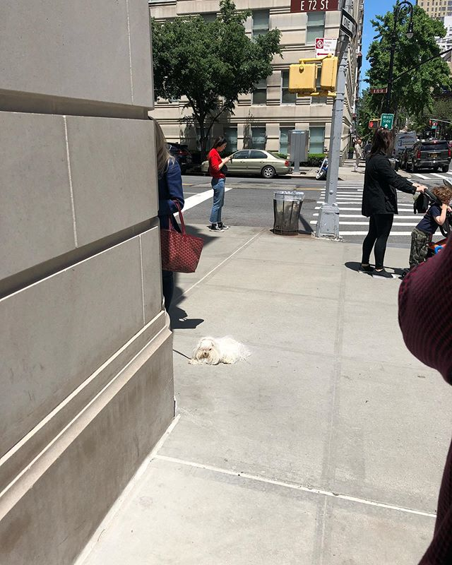 Wool on a leash, wool dog, dog wool, just wool... what is this? #whatiseeiswhatyouget #nyc #uppereastside #dogs #wool #pets