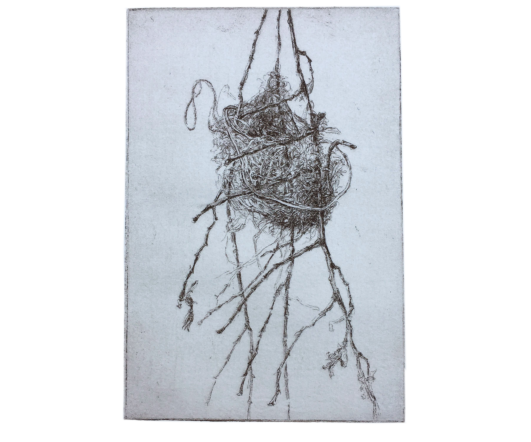 Oriole Nest, 2001, Etching. 7 x 4 ½