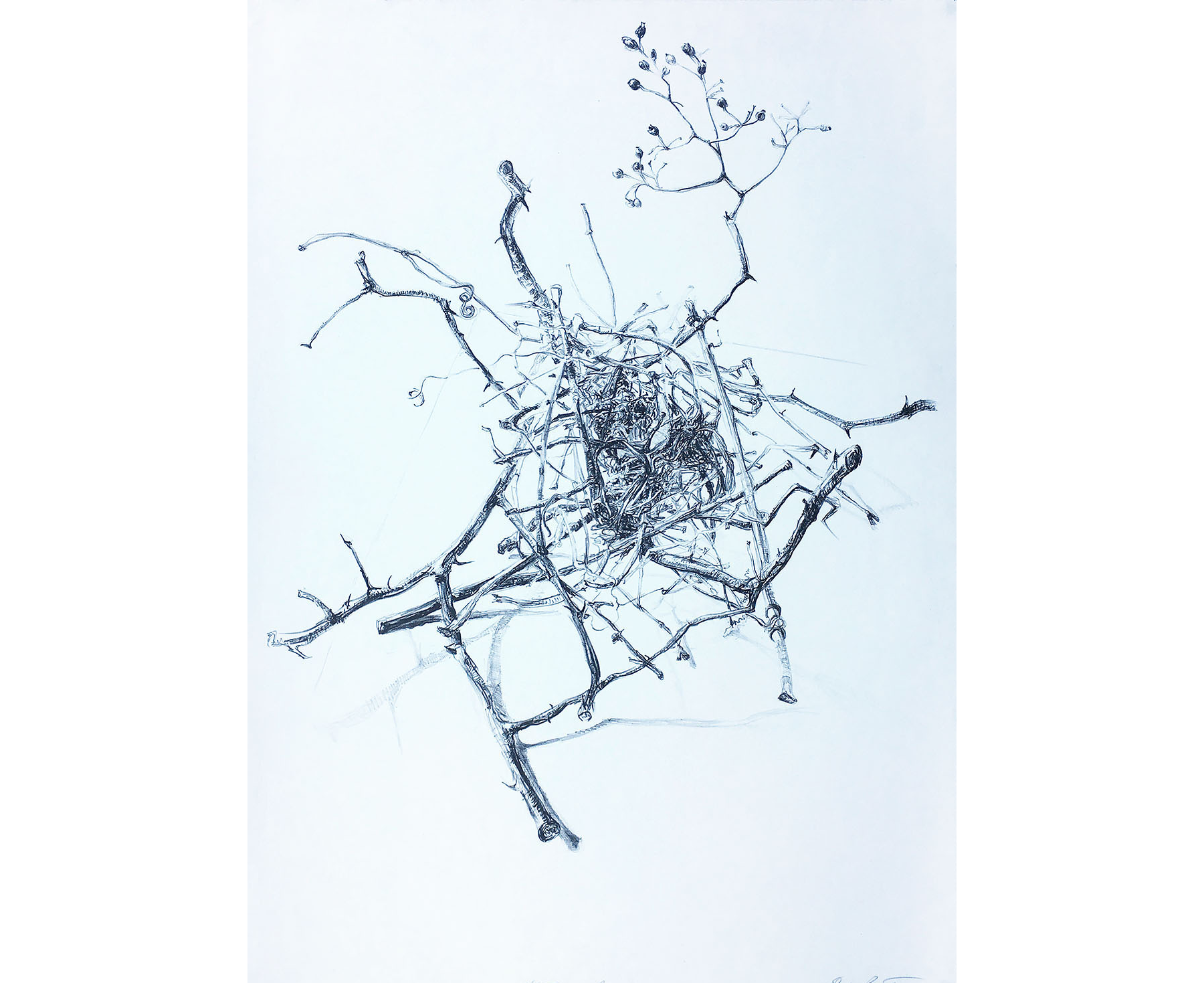 Nest in Branches, 1998, Lithograph. 36 x 26