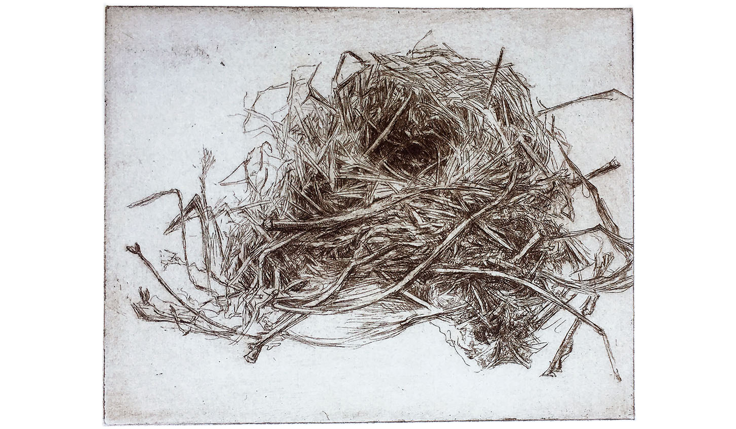 Song Sparrow Nest, 2002, Etching, 4 x 5