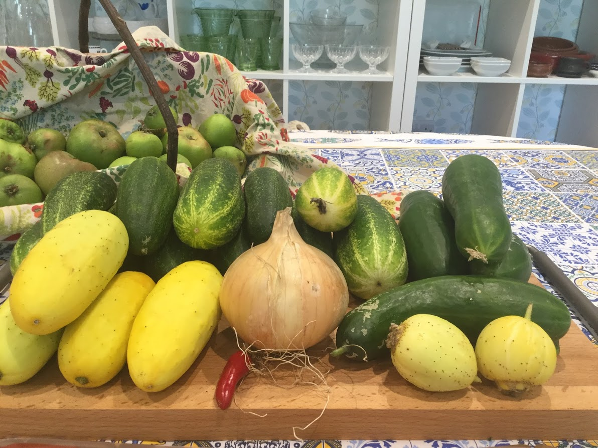Restina, Salt and Pepper, Crystal Lemon and Socrates cucumbers grown on the allotment.