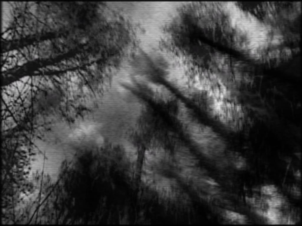 NightJourney_windyTrees.jpg