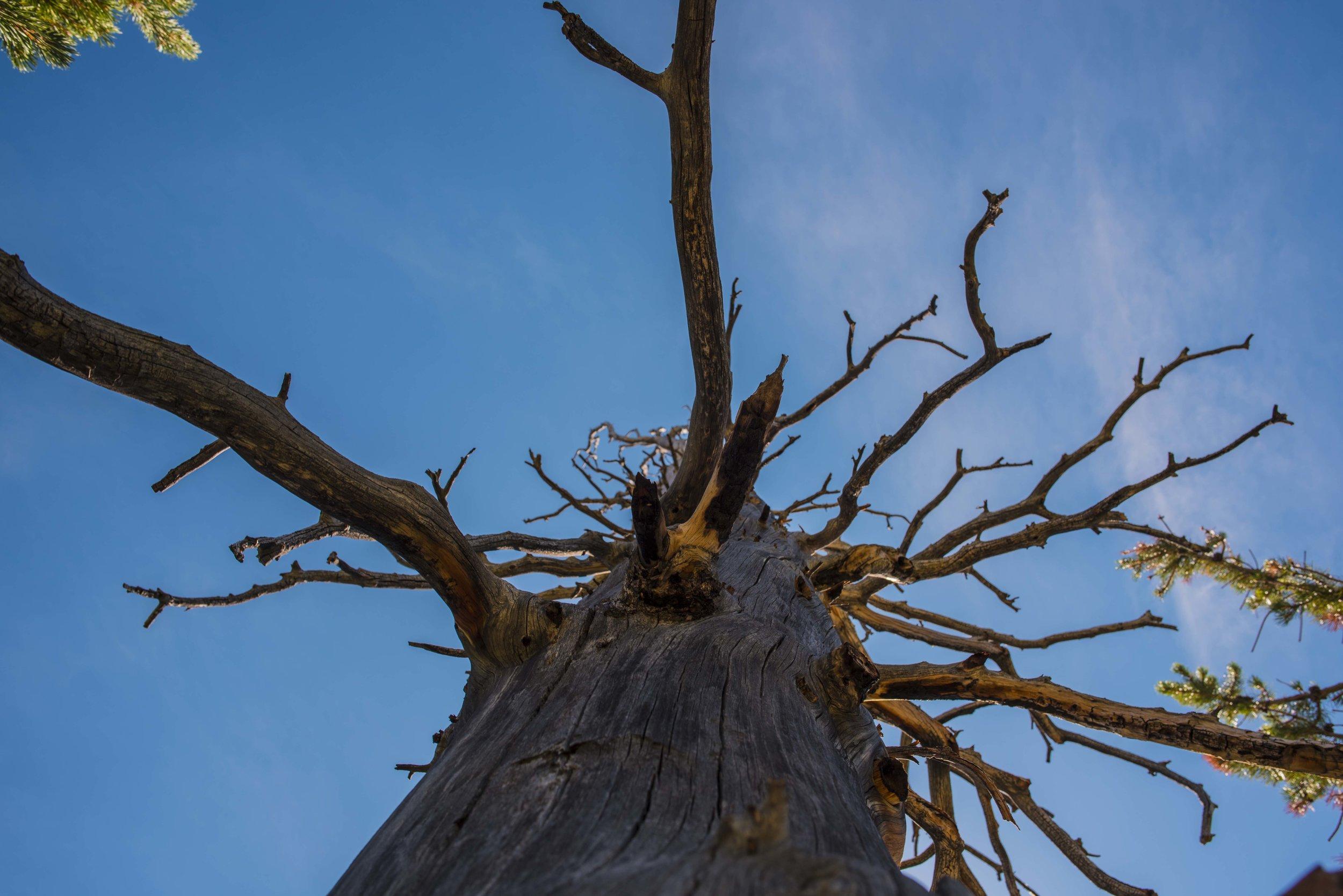 Bluebird Tree FB.jpg