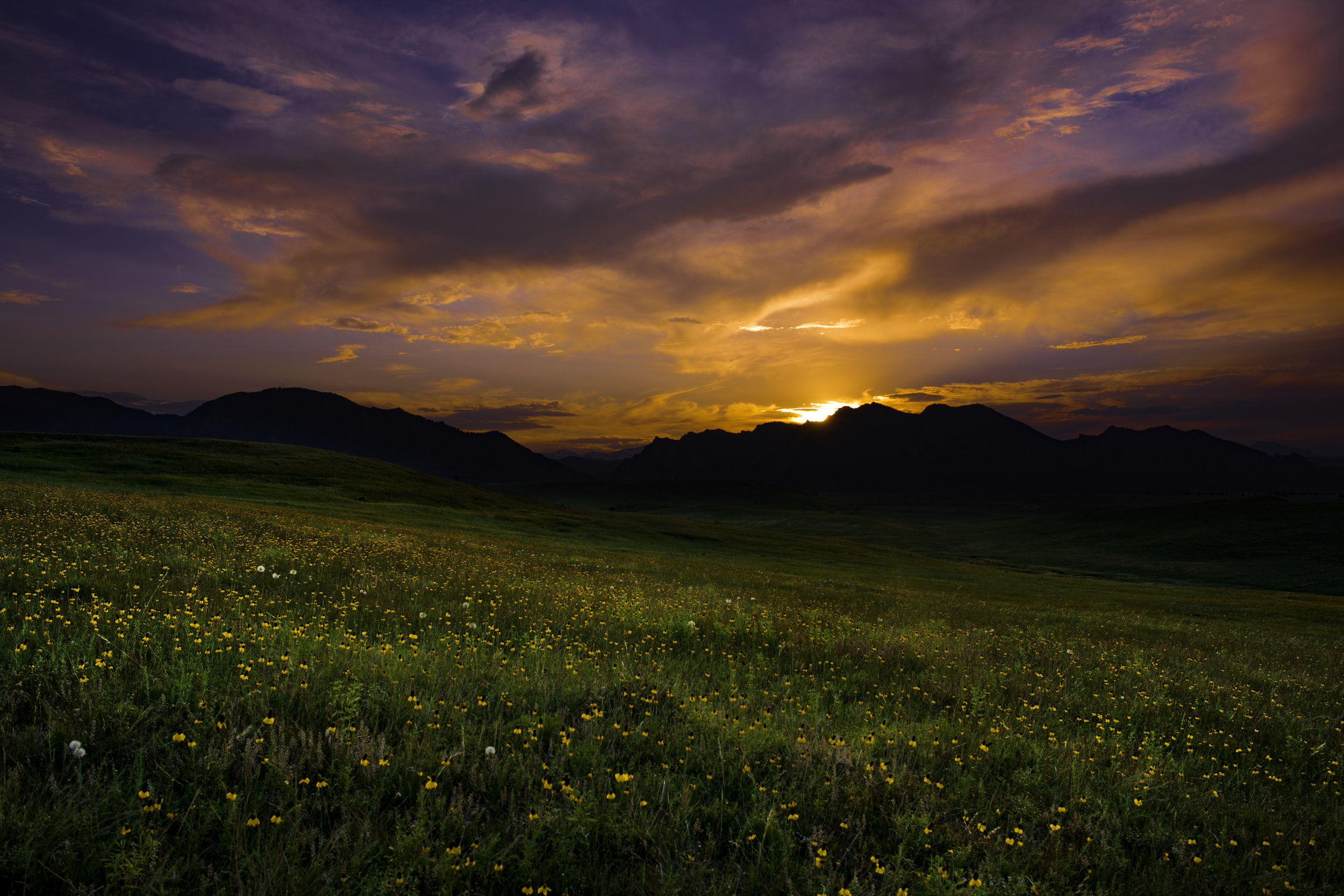 Sunset with Wildflowers.jpg