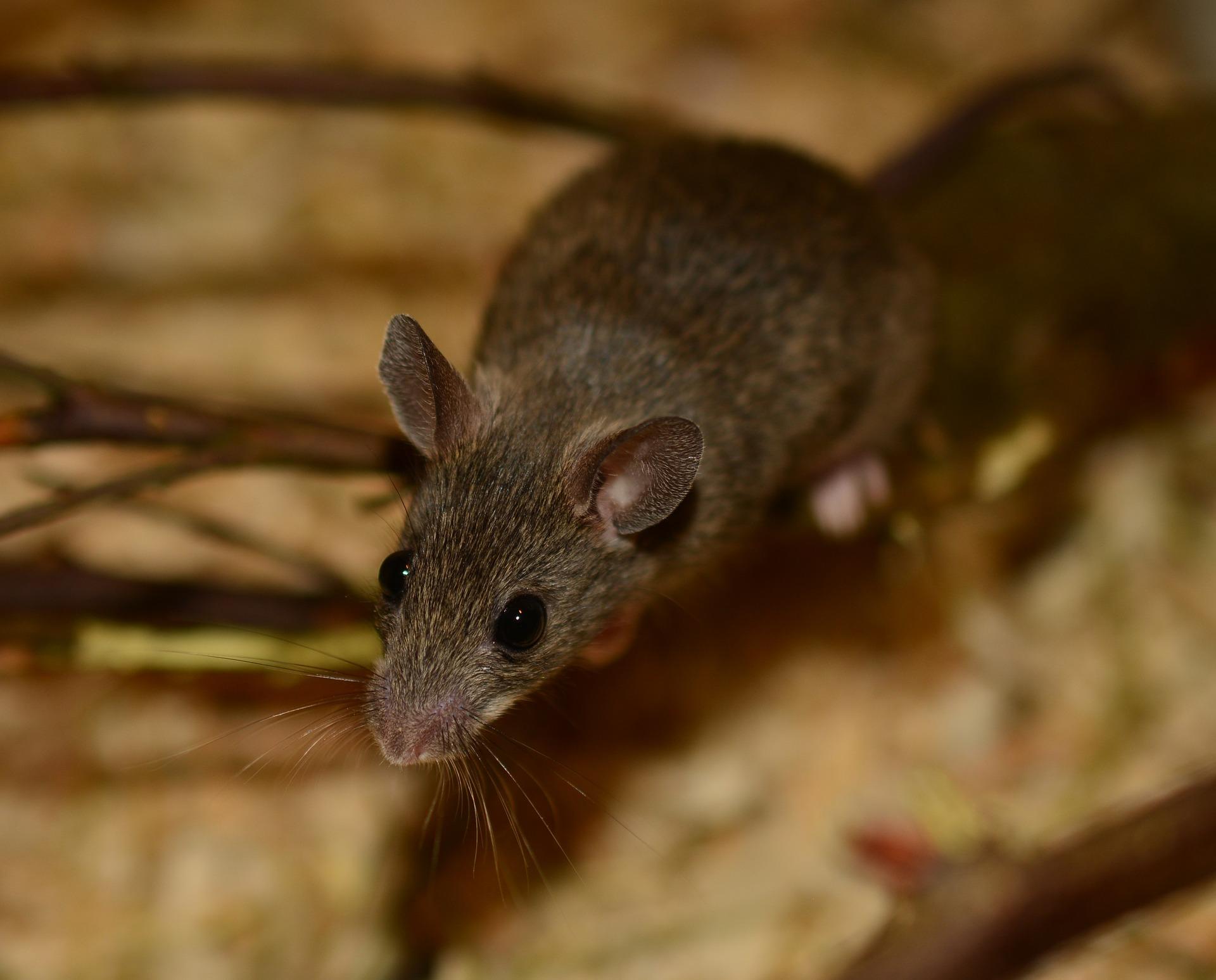 mouse-340404_1920.jpg