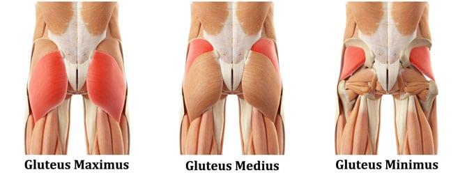 3-Gluteus-Muscles.jpg