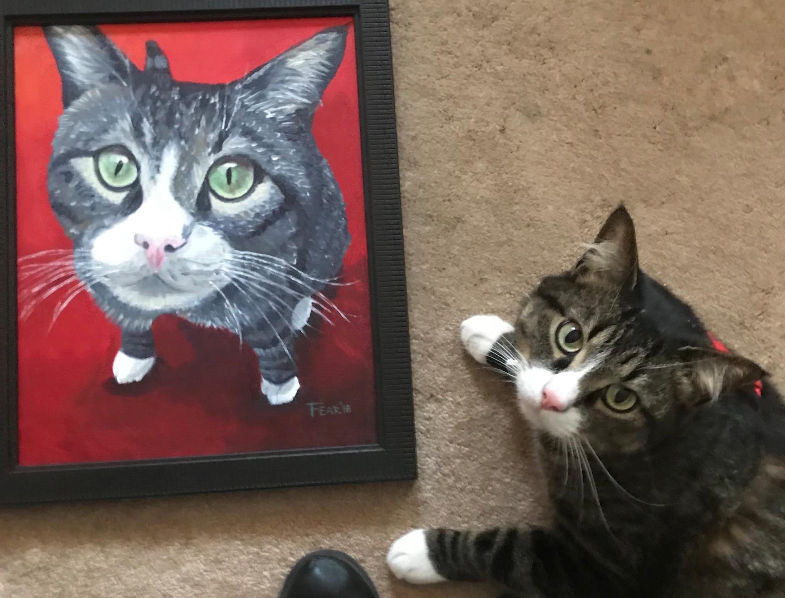 Zipper+Cat+pet+Portrait.jpg