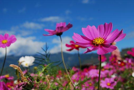 flower-2280164__340.jpg