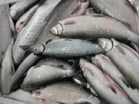 Fish oil helps the heart, hormones, brain, bones, and skin.