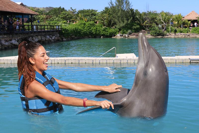 galeria-royal-swim-dolphin-cove-montego-bay-3.jpg