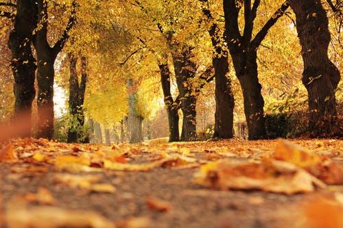 Autumn 1.jpeg