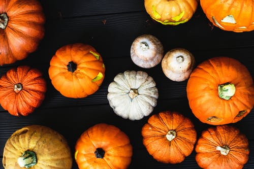 PUNKINS of all shapes and sizes