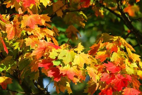 Autumn 4.jpeg