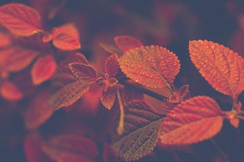 Autumn 3.jpeg