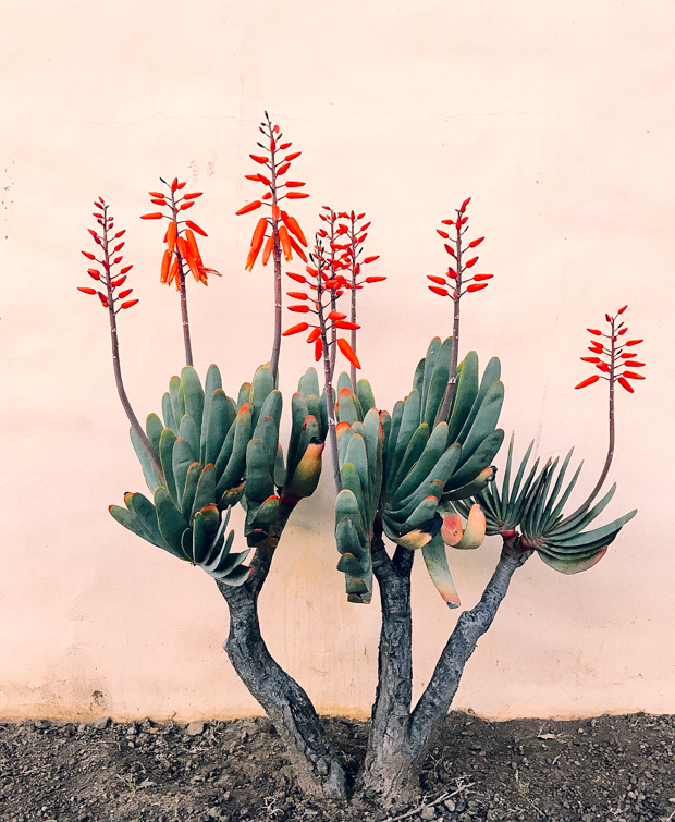 Botanical-garden-Justina-Blakeney-5-2.jpg