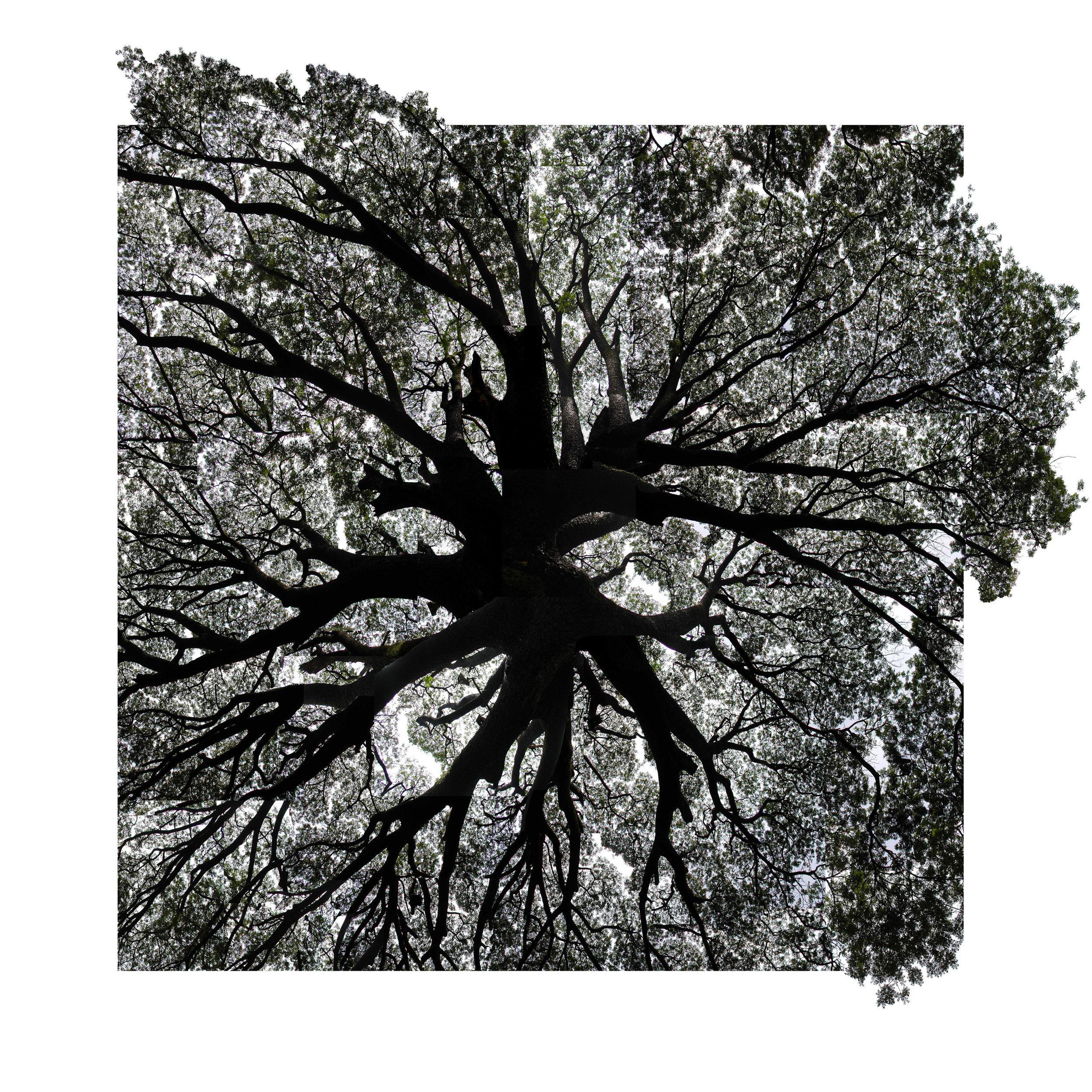 rain-tree-assembly-3-C.jpg