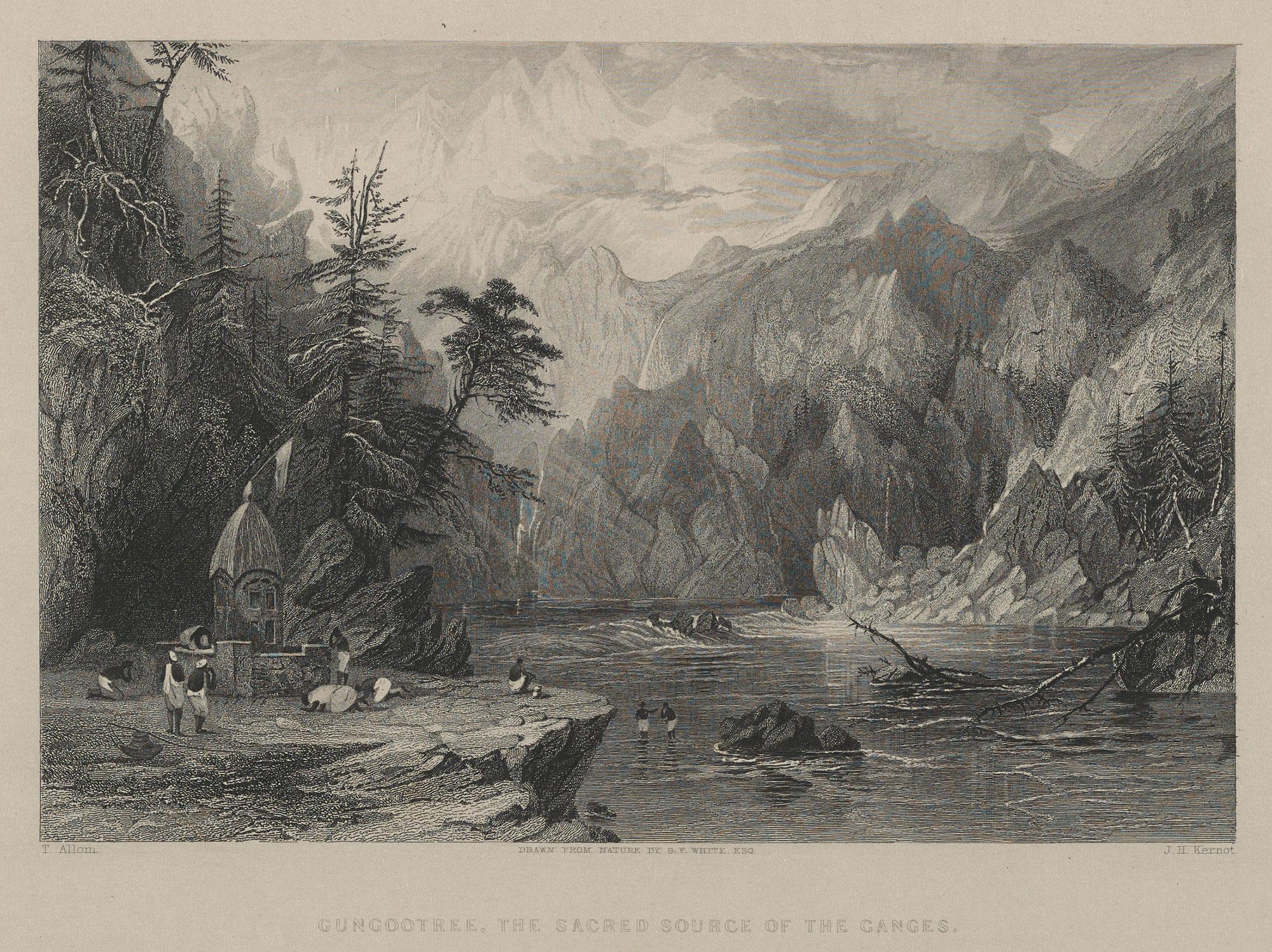 19_GF-White_Gungotree_1838-Penn.jpg