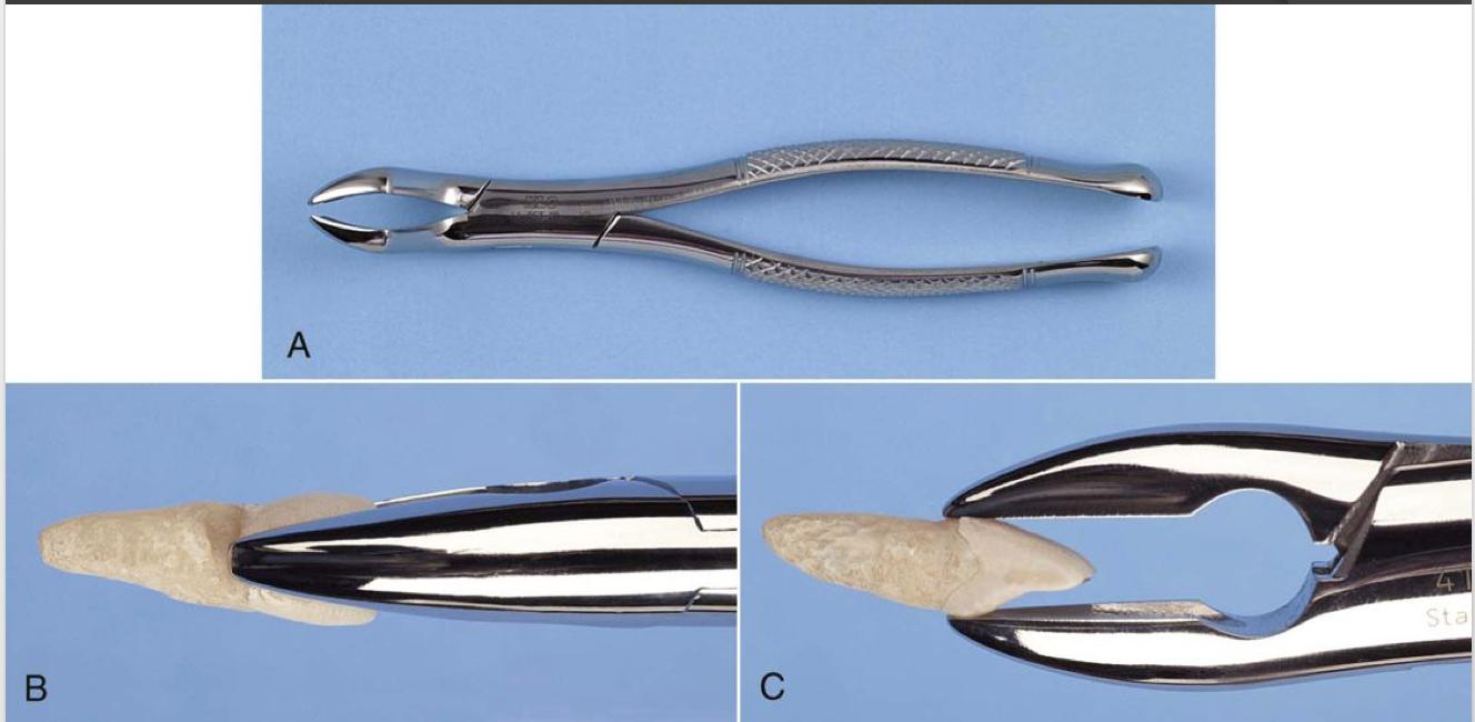 No. 1 - used for maxillary incisors