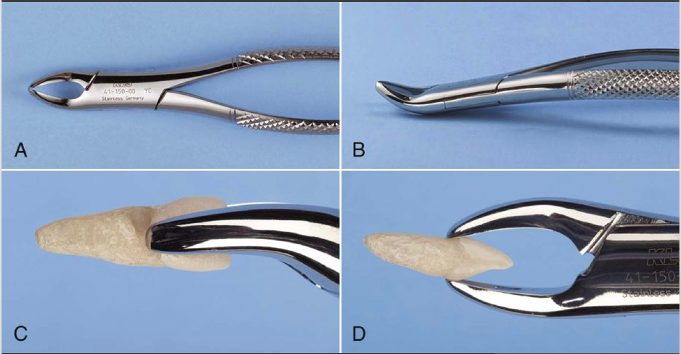 Upper Universal / No. 150 - used for any maxillary tooth