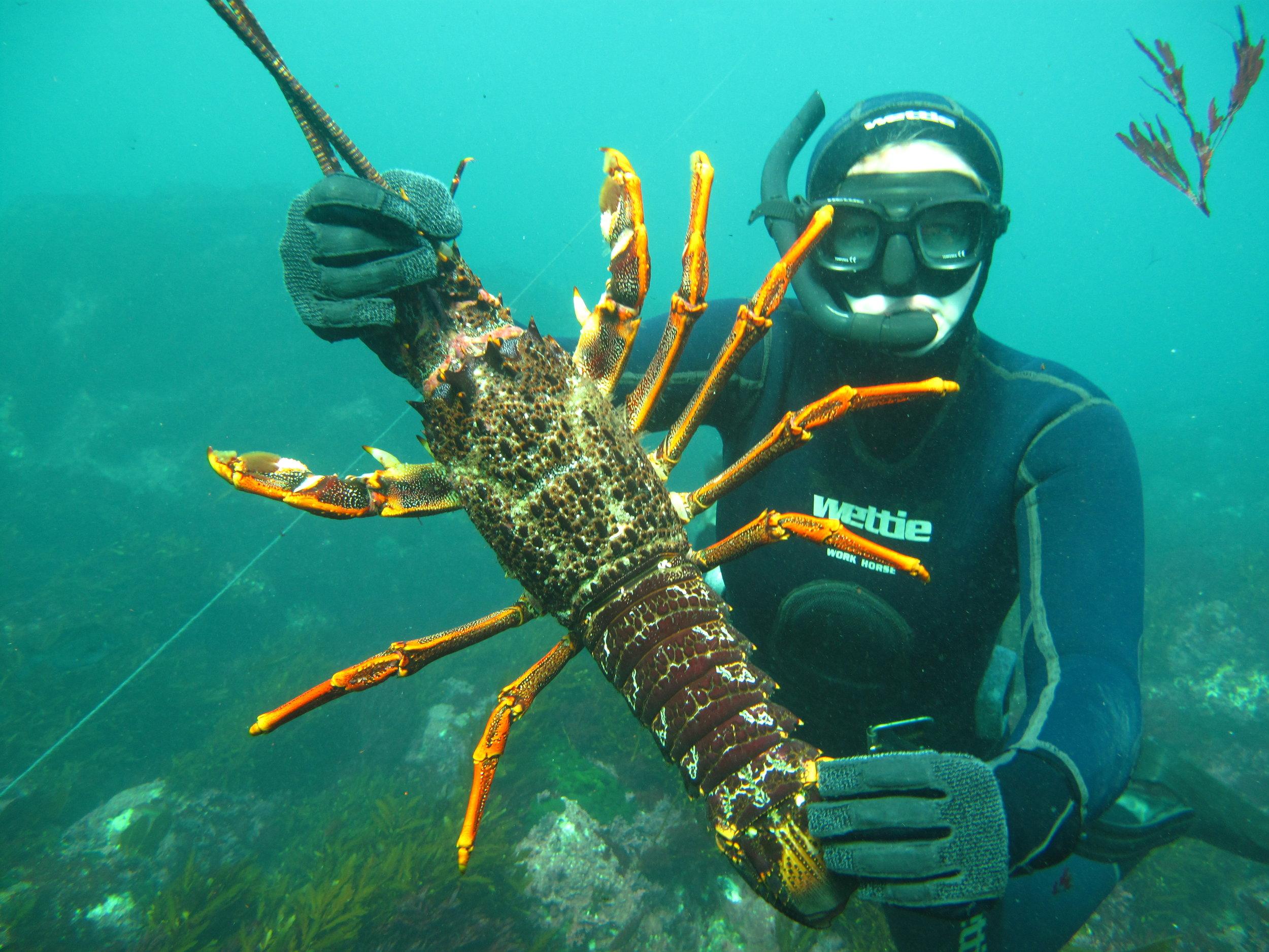 Crayfish Snorkling Adventure - Learn More