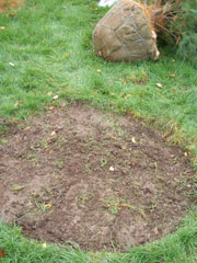 4. Prep for digging - Make sure the digging edge on your shovel is sharp (watch video here). Use a grinder or file to sharpen the shovel if it has a blunt digging edge. It's much easier to dig with a sharp shovel -- most shovels are dull when you buy them. A heavy tarp next to the planting hole provides a place to pile the soil. It will also make final cleanup much easier and neater.