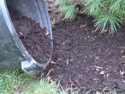 10. Finish planting - Backfill the planting hole 1/3 of the way and lightly compact the soil, ensuring the tree is still straight. Backfill the hole another 1/3 and lightly compact the soil again. Flood the planting hole with water at this point, and allow standing water to drain before you finish backfilling the hole with soil. Apply a couple inches of mulch to finish the planting job.